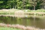 Golfballtauchen_4